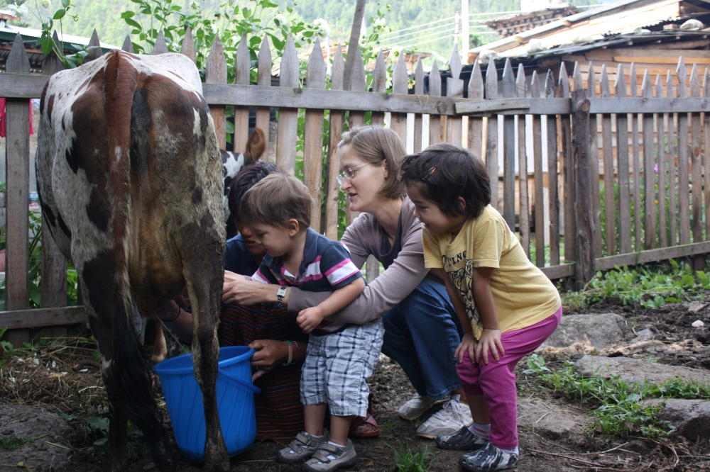 Guest milking the cow with host at Ugyen's Homestay